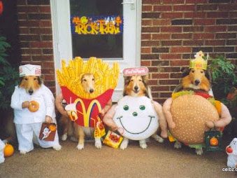 Halloween Costumes for Dogs – Trick or Treat?